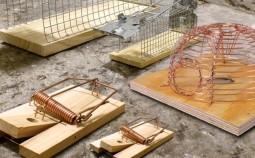 Как сделать многоразовую ловушку для грызунов своими руками за копейки