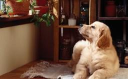 Чем отделать стены квартиры, если в доме есть домашние животные