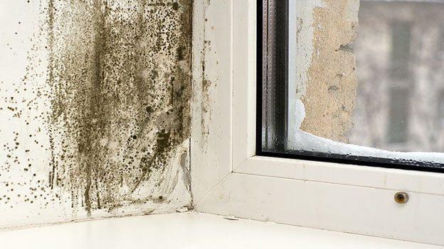 Плесень и грибок на стене и пластиковом окне