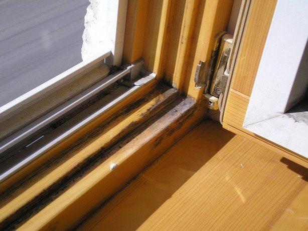 Плесень и грибок деревянного окна